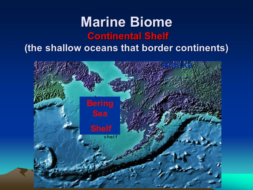 Marine Biome Continental Shelf (the shallow oceans that border continents)