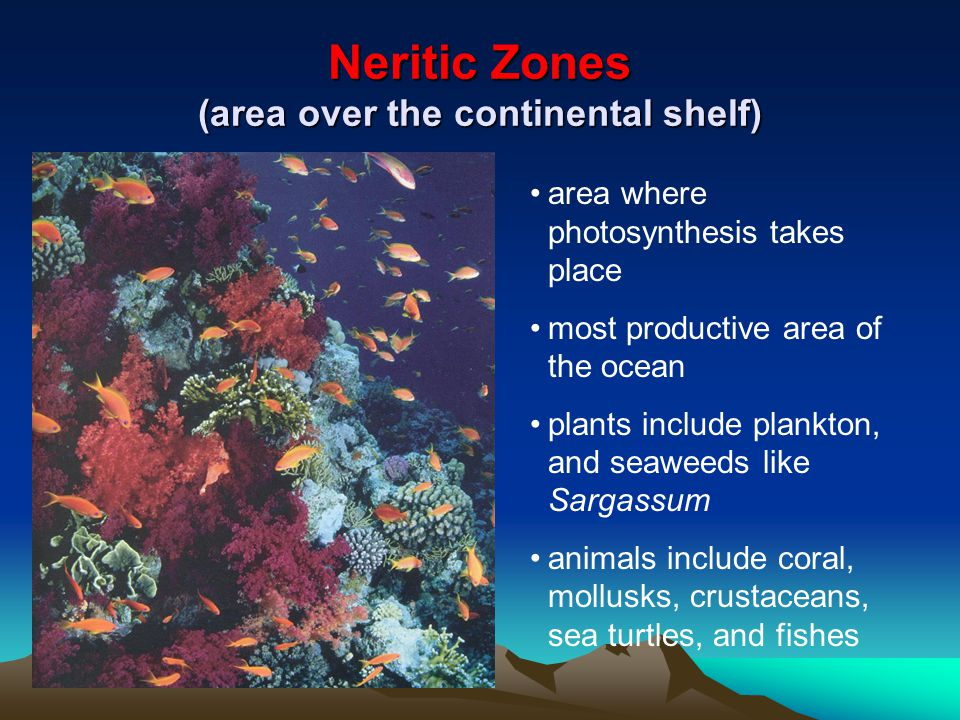 Neritic Zones (area over the continental shelf)