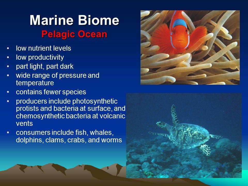 Marine Biome Pelagic Ocean