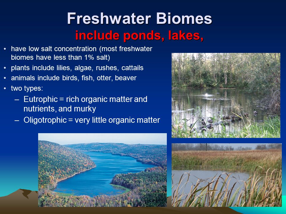 Freshwater Biomes include ponds, lakes,