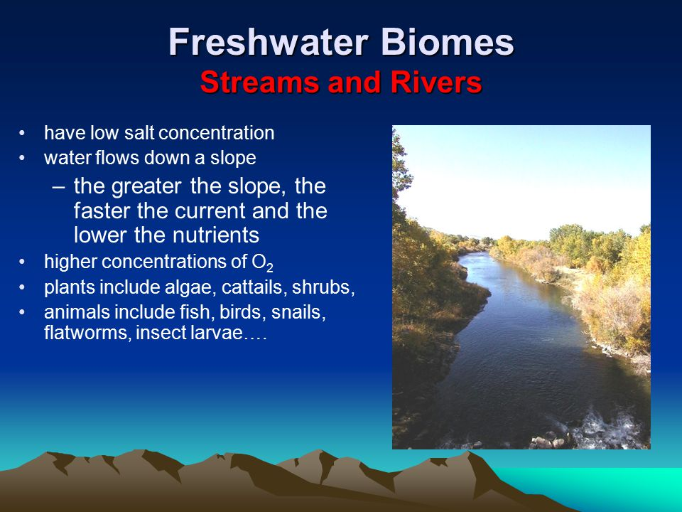 Freshwater Biomes Streams and Rivers