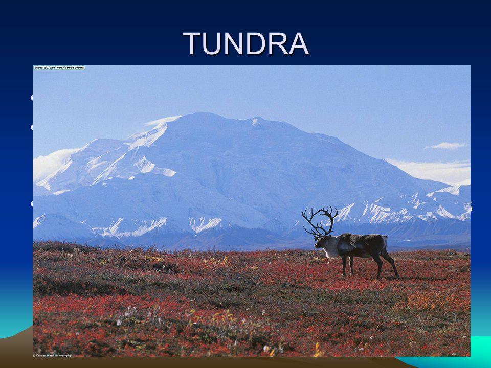 TUNDRA Terrestrial = land