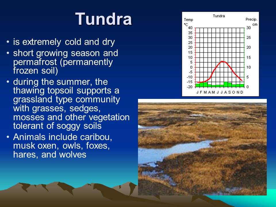 Tundra is extremely cold and dry