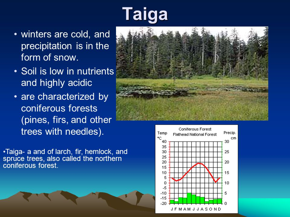 Taiga winters are cold, and precipitation is in the form of snow.