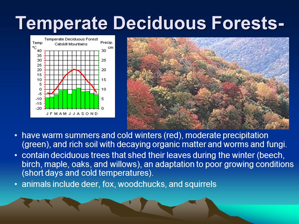 Temperate Deciduous Forests-
