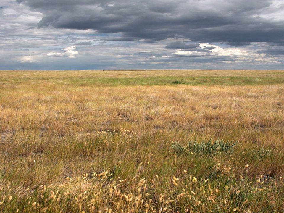 Grasslands Grasslands- Large communities covered with grasses and similar small plants.