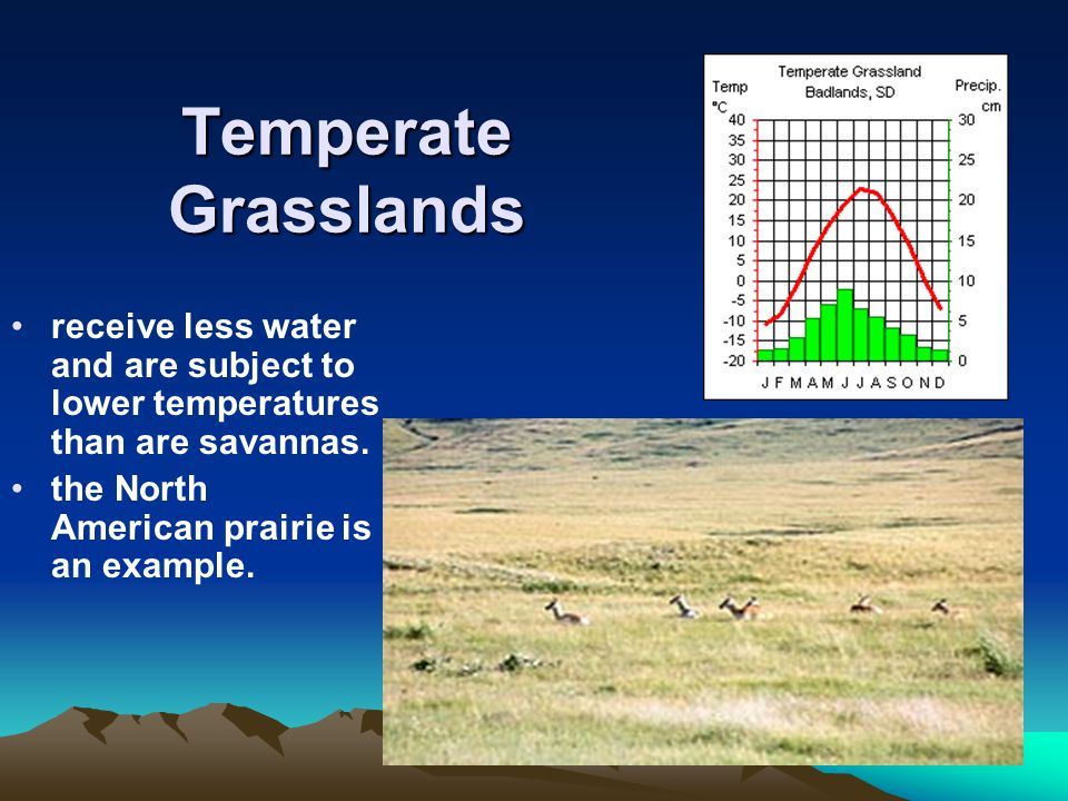 Temperate Grasslands receive less water and are subject to lower temperatures than are savannas.