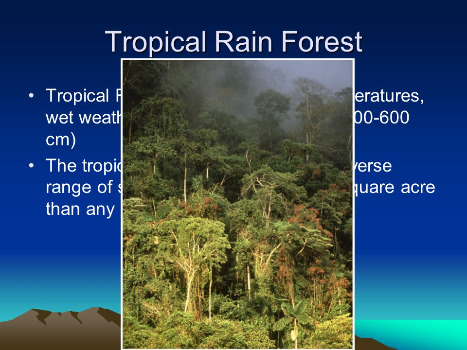 Tropical Rain Forest Tropical Rain Forest- have warm temperatures, wet weather, and lush plant growth. (200-600 cm)
