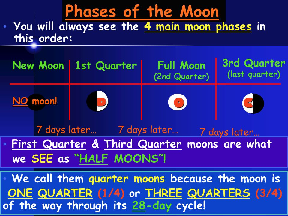Phases of the Moon You will always see the 4 main moon phases in this order: 3rd Quarter. (last quarter)
