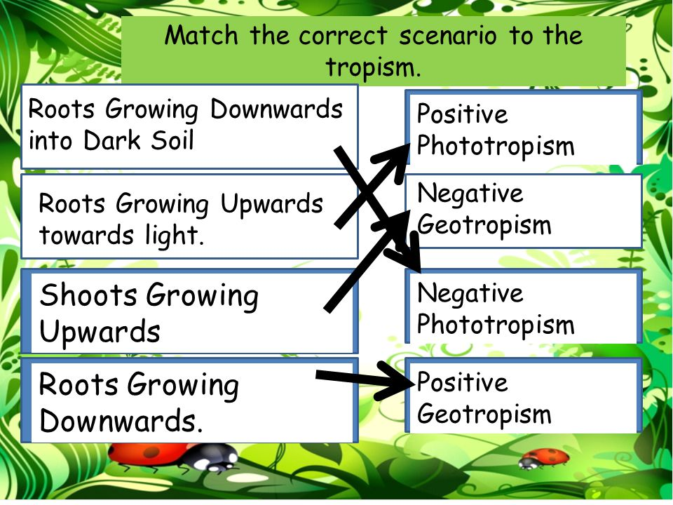 Match the correct scenario to the tropism.