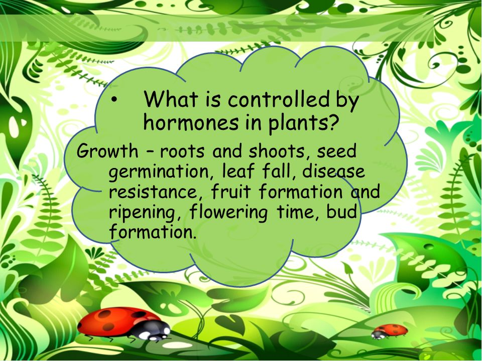 What is controlled by hormones in plants