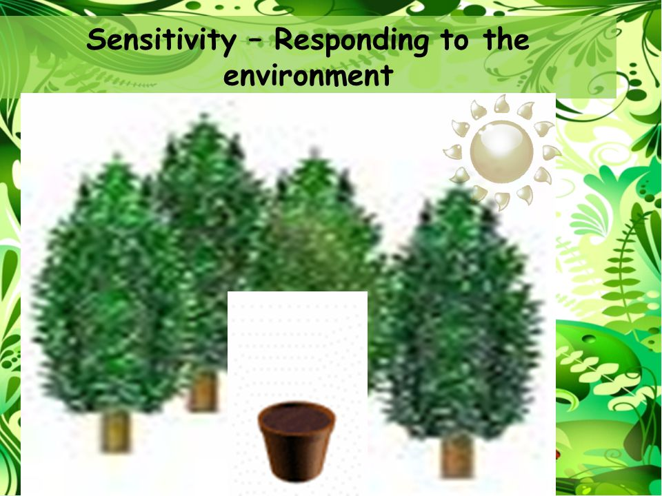 Sensitivity – Responding to the environment