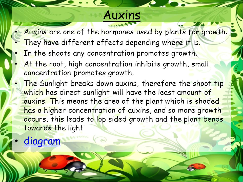 Auxins Auxins are one of the hormones used by plants for growth. They have different effects depending where it is.