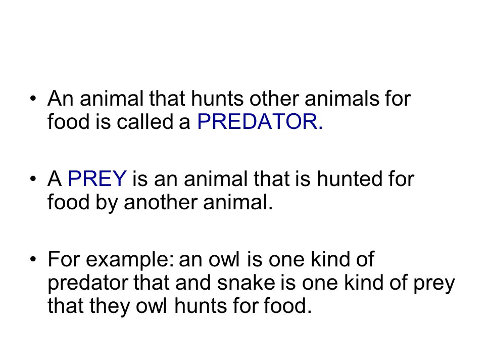 An animal that hunts other animals for food is called a PREDATOR.