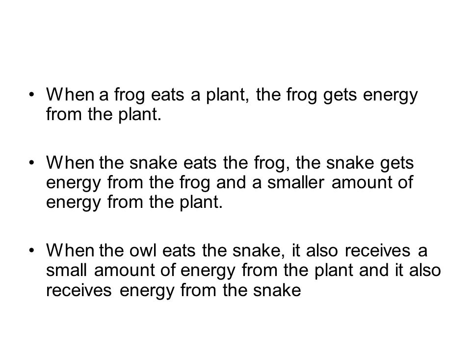 When a frog eats a plant, the frog gets energy from the plant.
