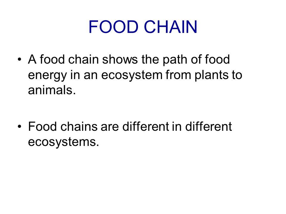 FOOD CHAIN A food chain shows the path of food energy in an ecosystem from plants to animals.