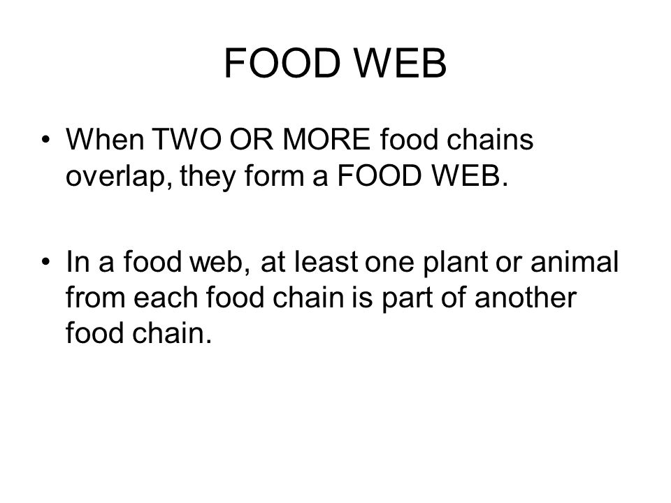 FOOD WEB When TWO OR MORE food chains overlap, they form a FOOD WEB.