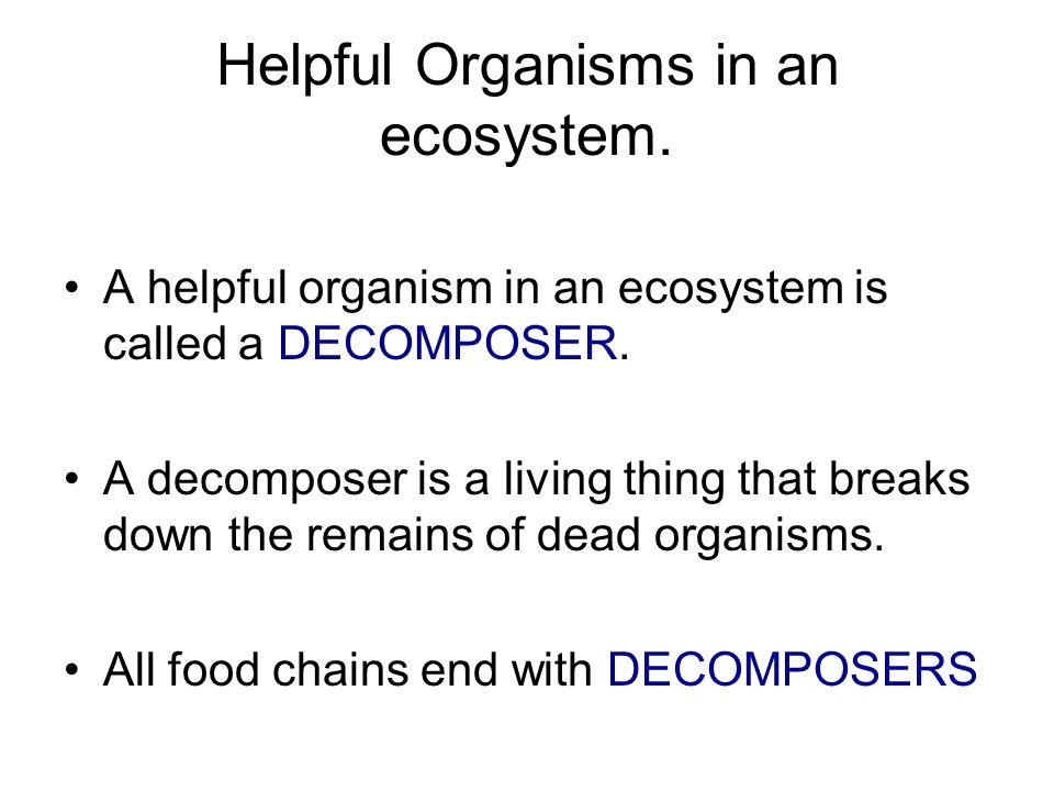 Helpful Organisms in an ecosystem.