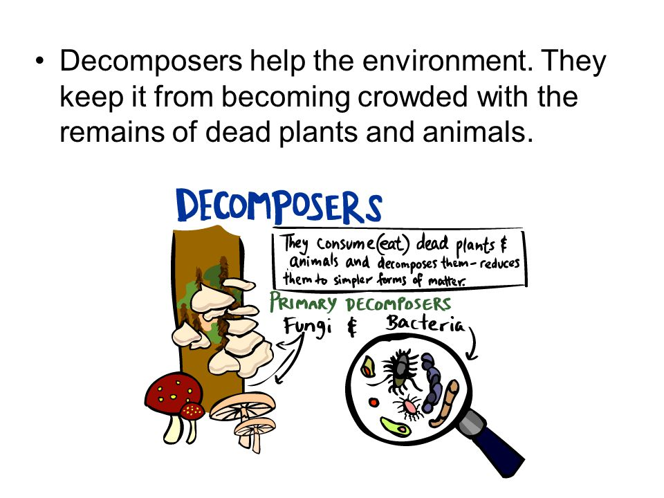 Decomposers help the environment