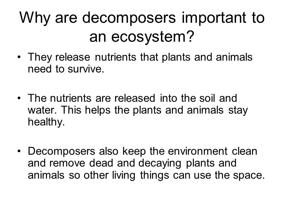 Why are decomposers important to an ecosystem