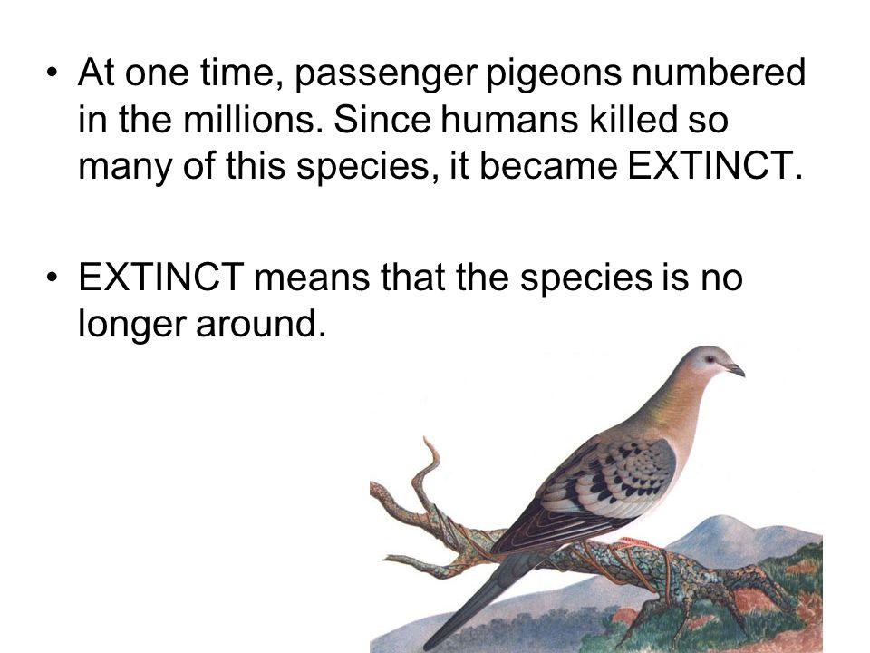 At one time, passenger pigeons numbered in the millions