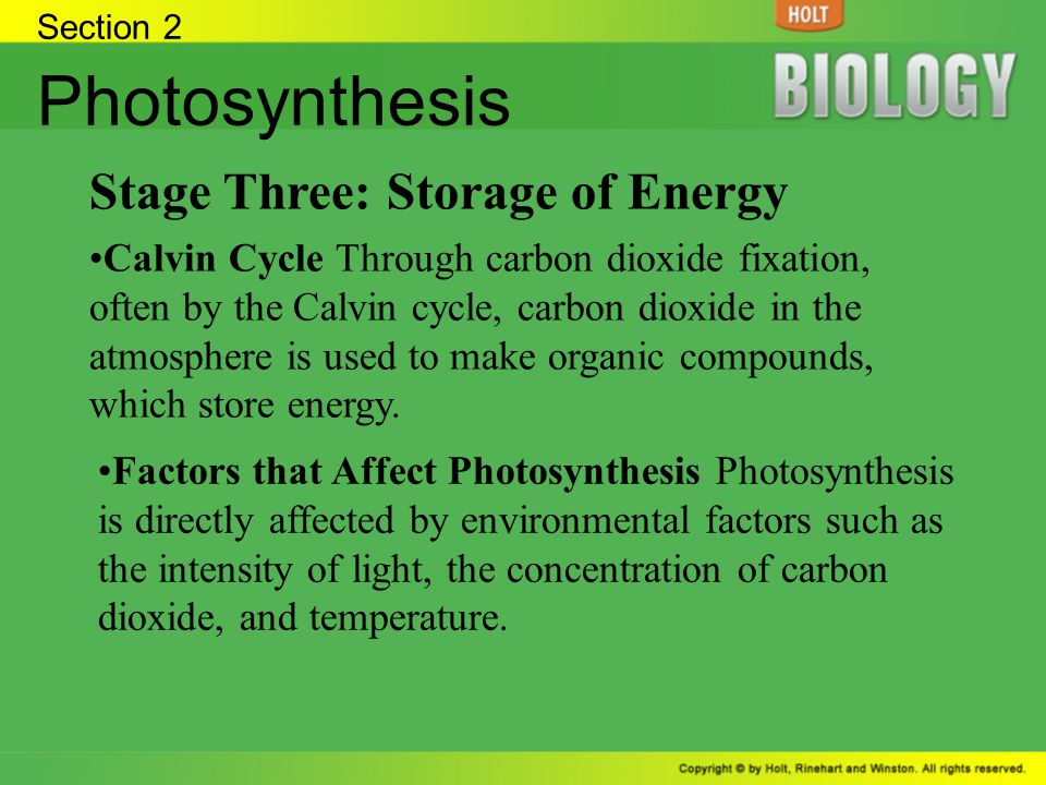 Photosynthesis Stage Three: Storage of Energy
