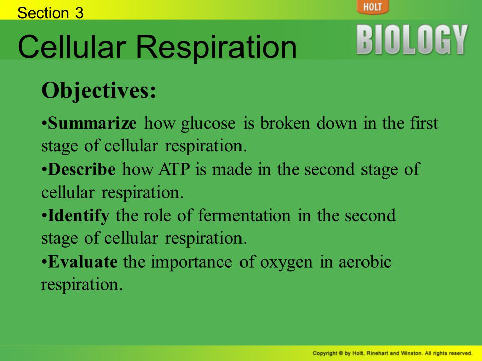 Cellular Respiration Objectives: