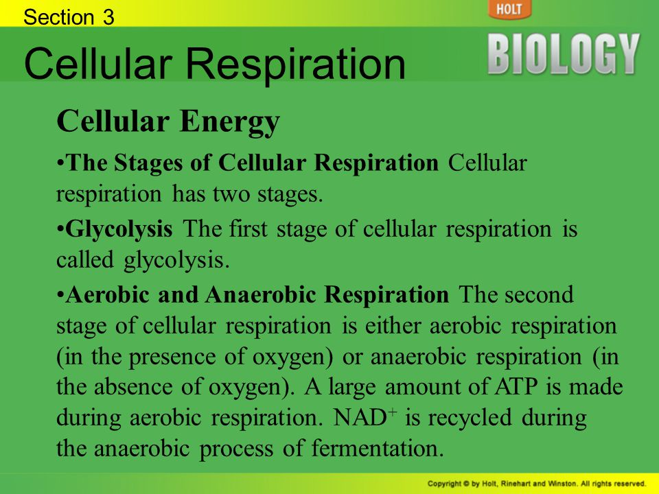 Cellular Respiration Cellular Energy