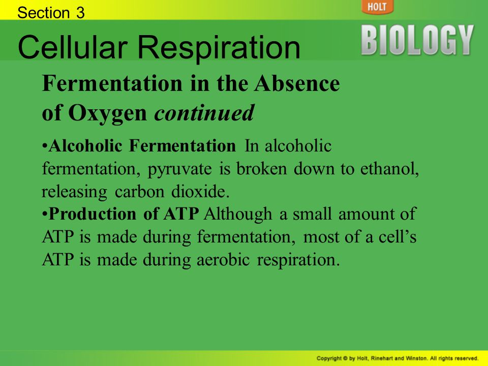 Cellular Respiration Fermentation in the Absence of Oxygen continued