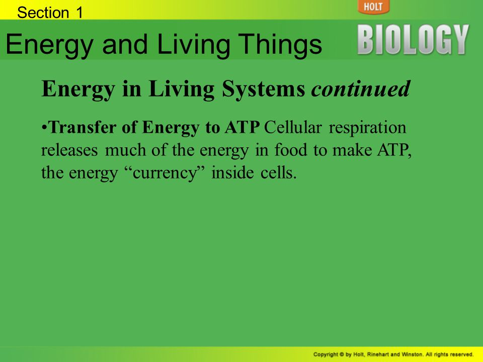 Energy and Living Things