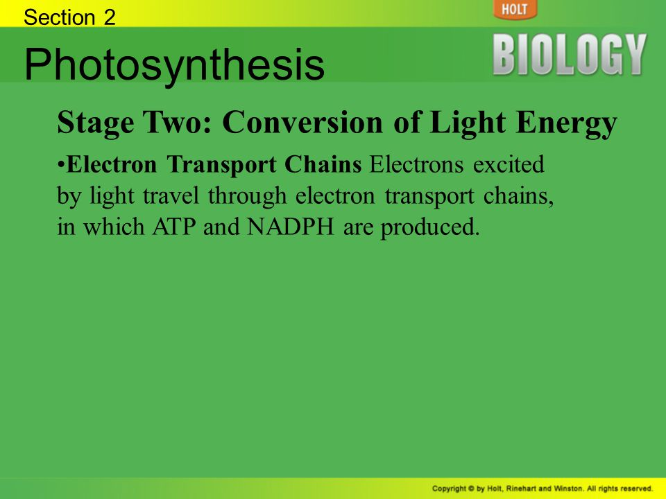 Photosynthesis Stage Two: Conversion of Light Energy