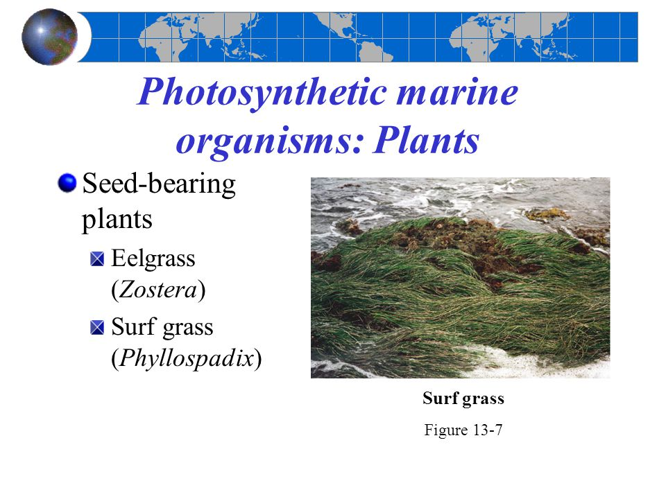 Photosynthetic marine organisms: Plants