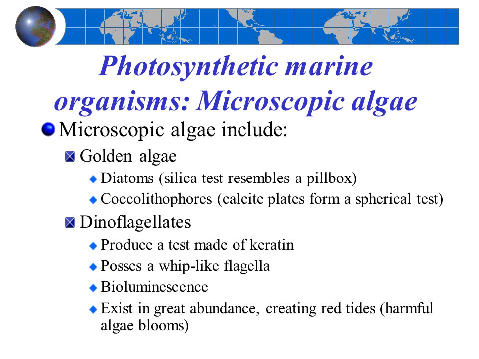 Photosynthetic marine organisms: Microscopic algae