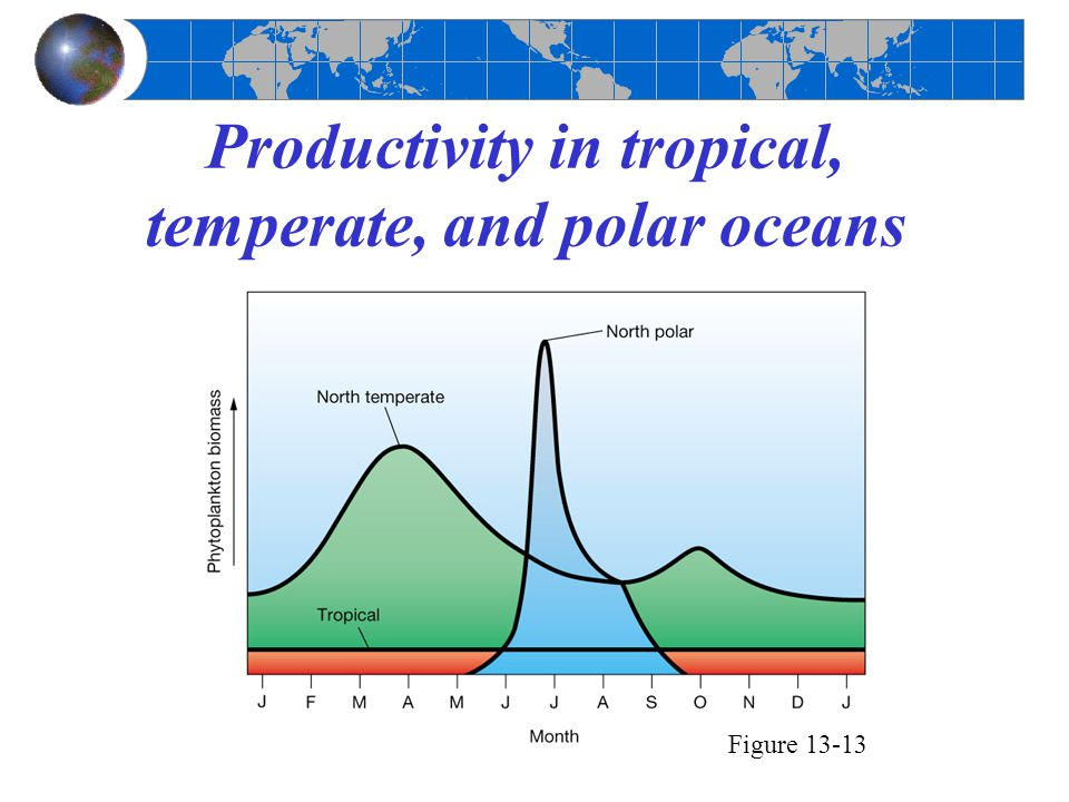 Productivity in tropical, temperate, and polar oceans