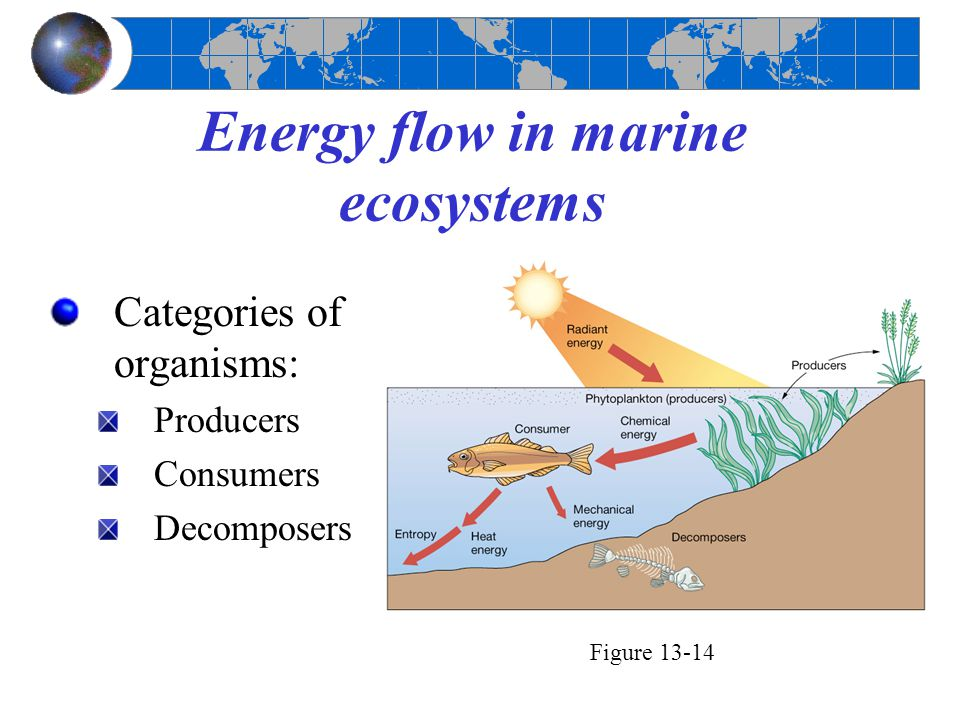 Energy flow in marine ecosystems