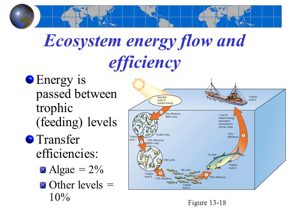 Ecosystem energy flow and efficiency