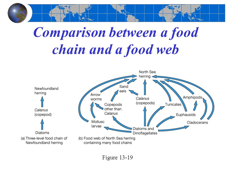 Comparison between a food chain and a food web