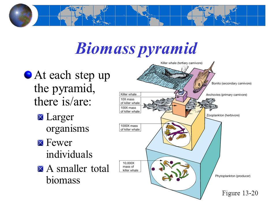 Biomass pyramid At each step up the pyramid, there is/are: