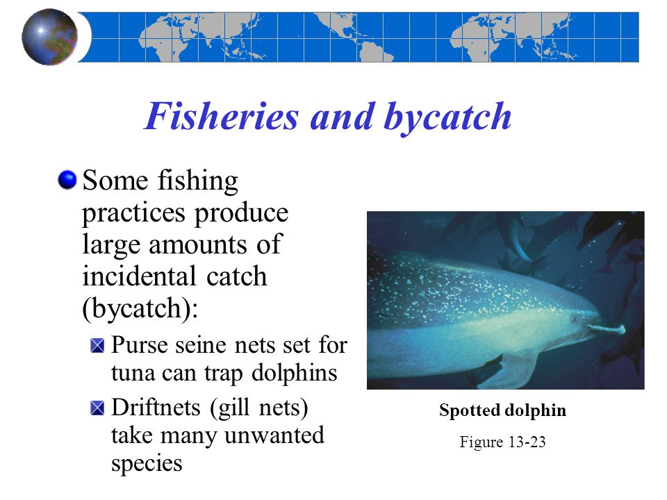 Fisheries and bycatch Some fishing practices produce large amounts of incidental catch (bycatch): Purse seine nets set for tuna can trap dolphins.
