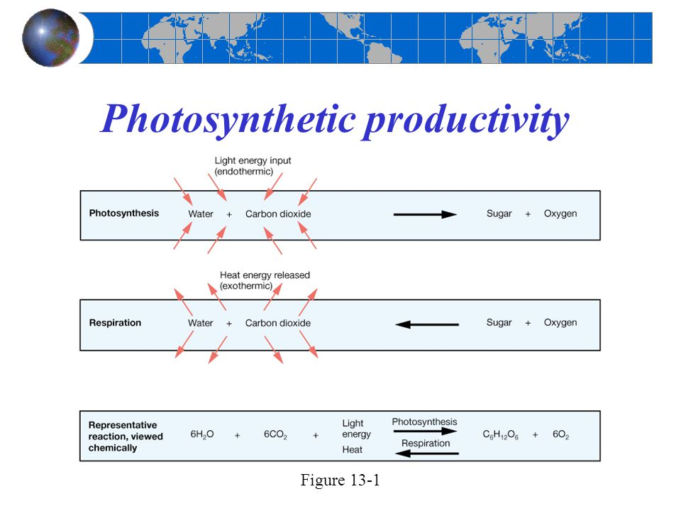 Photosynthetic productivity