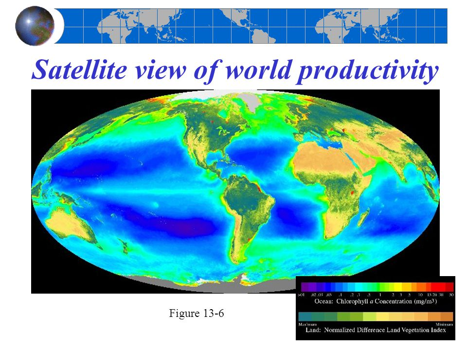 Satellite view of world productivity