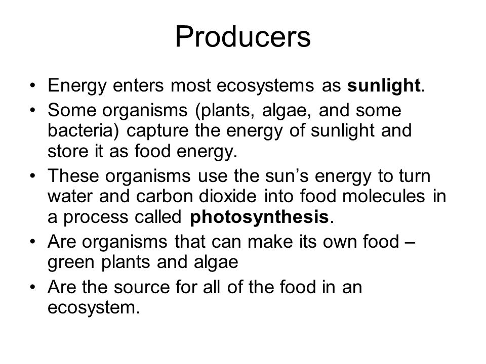 Producers Energy enters most ecosystems as sunlight.
