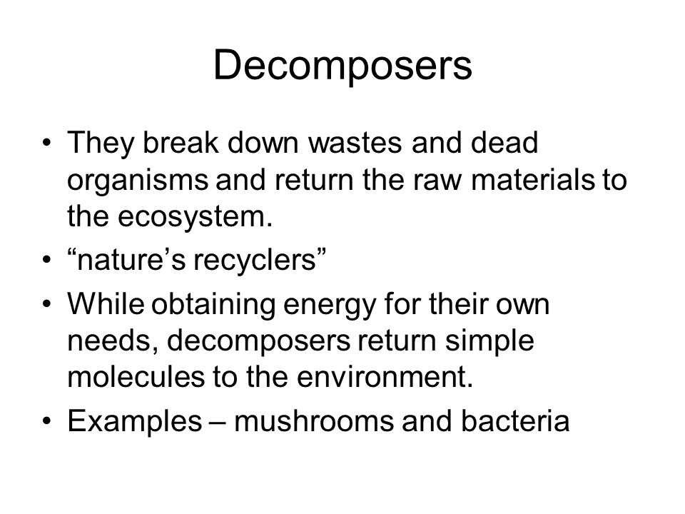 Decomposers They break down wastes and dead organisms and return the raw materials to the ecosystem.