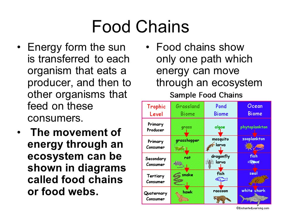 Food Chains Energy form the sun is transferred to each organism that eats a producer, and then to other organisms that feed on these consumers.