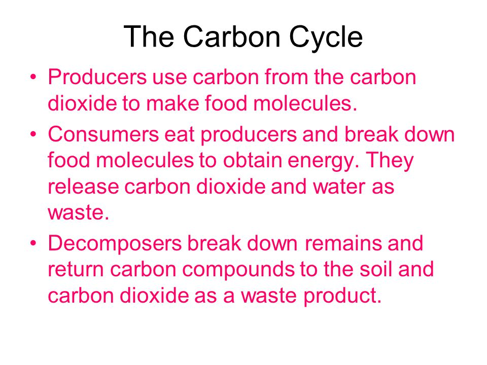 The Carbon Cycle Producers use carbon from the carbon dioxide to make food molecules.