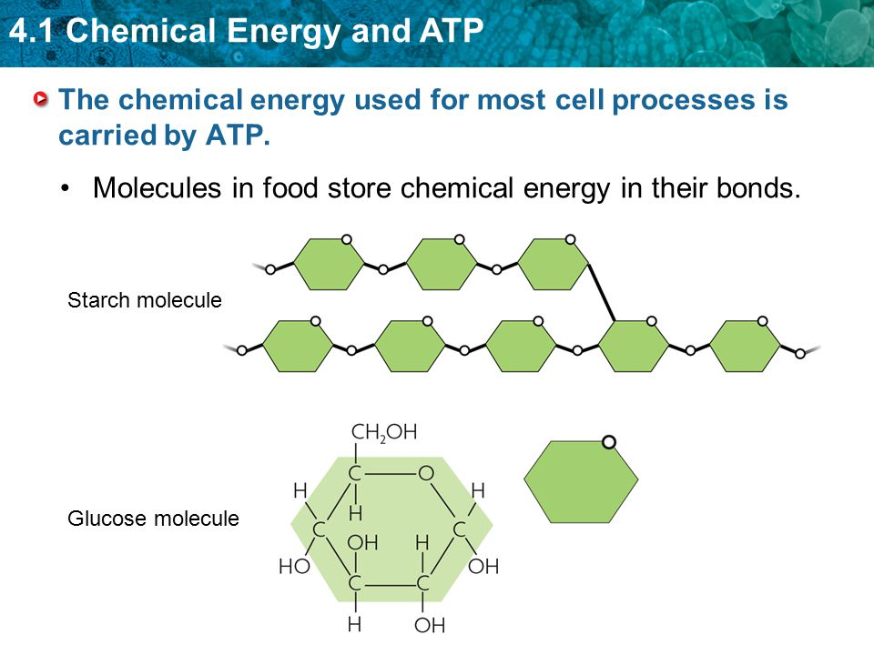 The chemical energy used for most cell processes is carried by ATP.