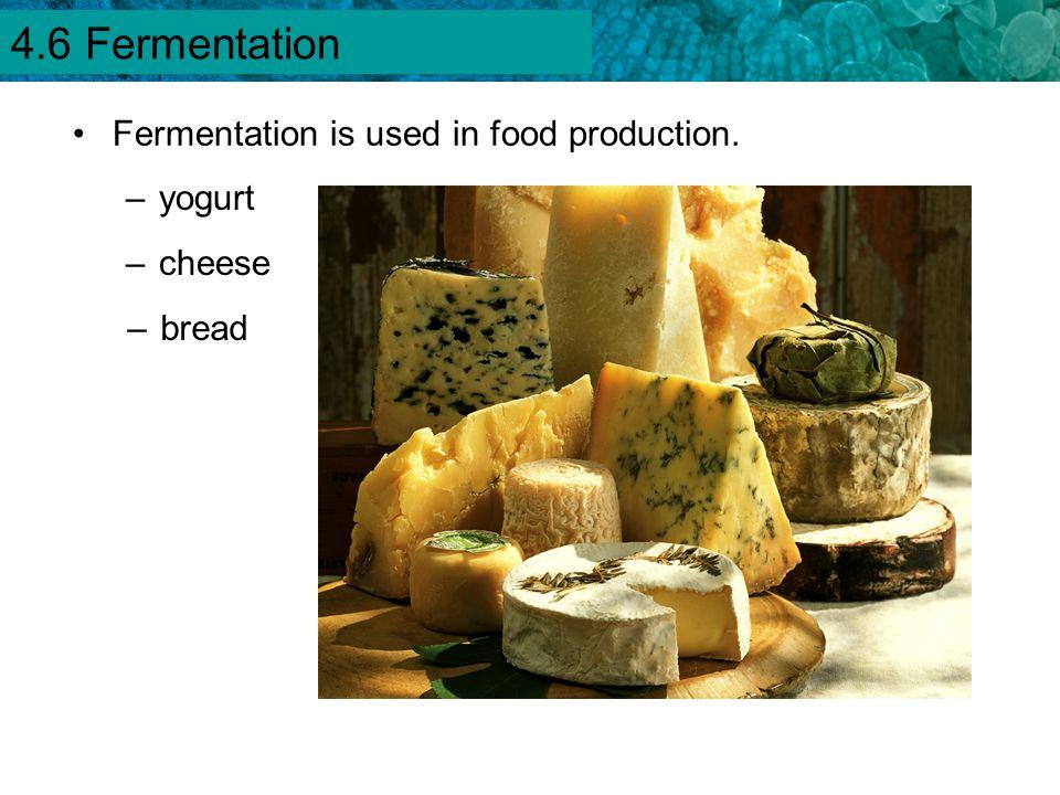 4.6 Fermentation Fermentation is used in food production. yogurt