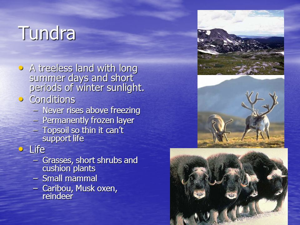 Tundra A treeless land with long summer days and short periods of winter sunlight. Conditions. Never rises above freezing.