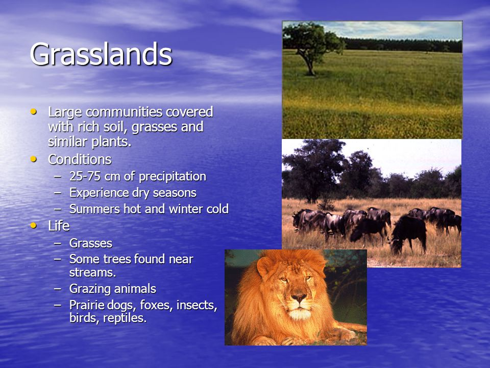 Grasslands Large communities covered with rich soil, grasses and similar plants. Conditions. 25-75 cm of precipitation.