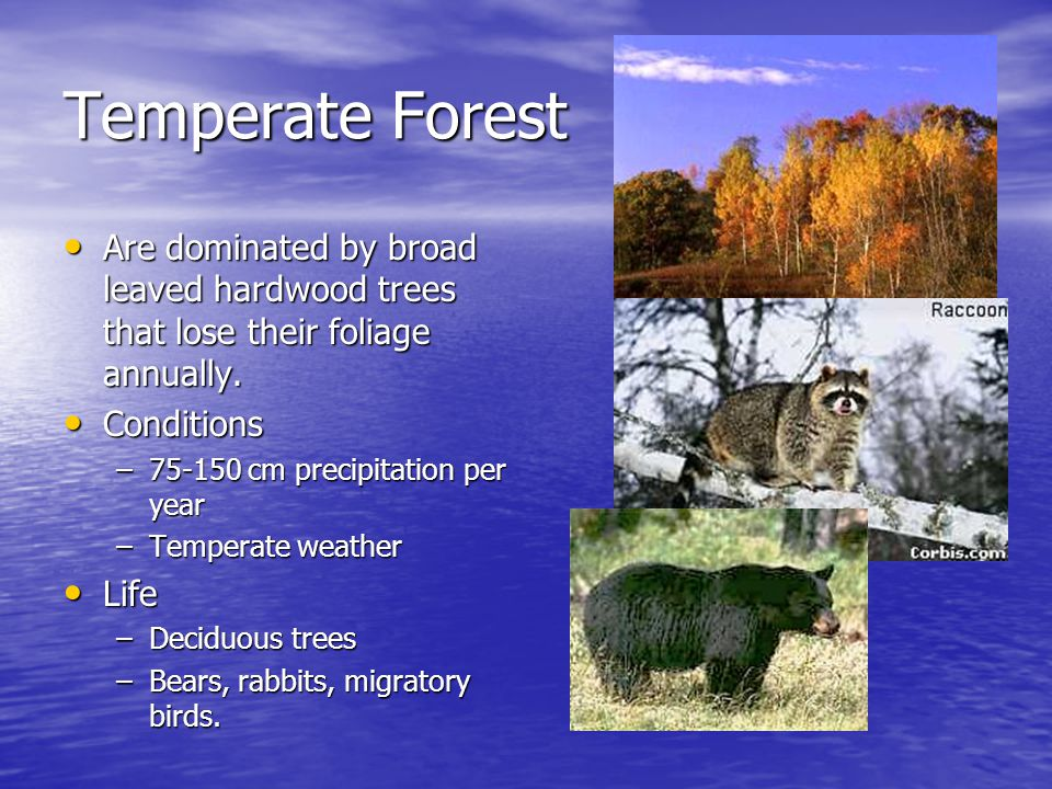 Temperate Forest Are dominated by broad leaved hardwood trees that lose their foliage annually. Conditions.